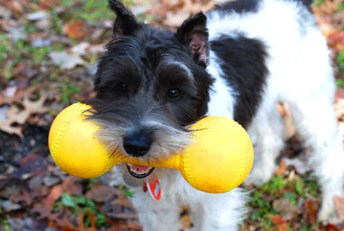 Jackie with yellow toy