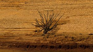 LATimes Drought Photo Allen J. Schaben -20140619-027