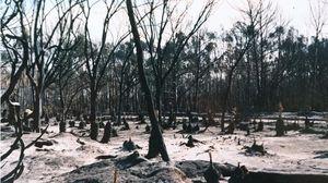 Wanilla Forest Photo Credit Callum Robertson Adelaidenow.com