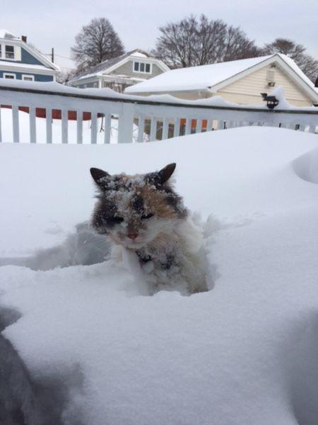 Snow CO (2)