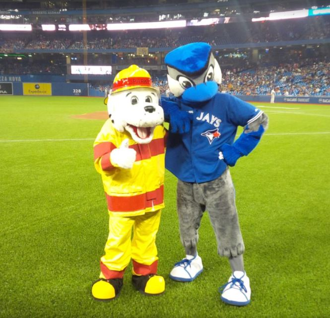 Sparky and Ace on the field