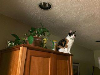 Cat Perch 2