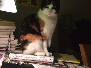 Cat book (2)